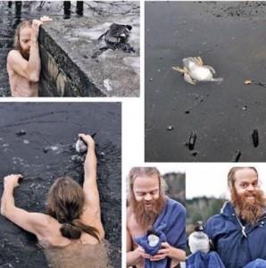رجل انقذ بطة